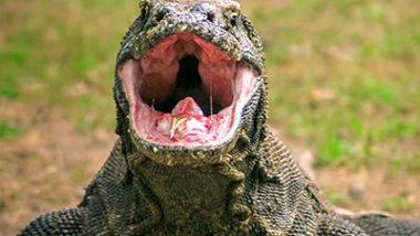 Biggest Lizard