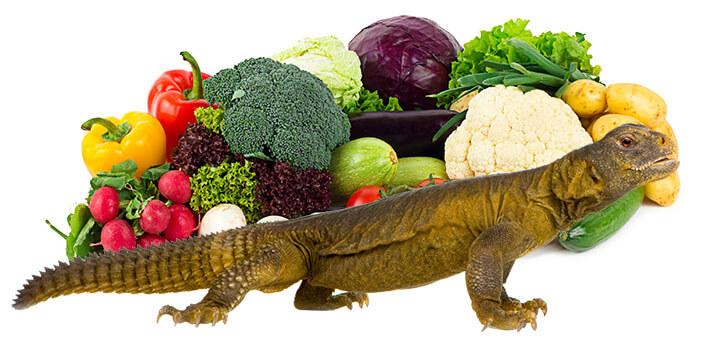Vegetarian Lizard